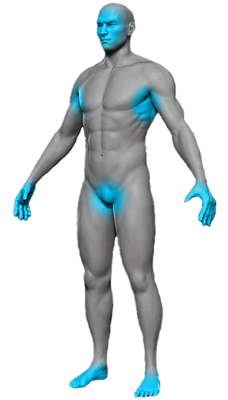 Corpo